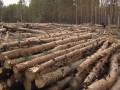 Украина почти на четверть увеличила заготовку леса-кругляка