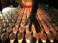 Ъ: Перед Пасхой в ЕС наблюдается дефицит яиц