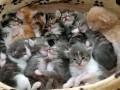 В Одессе арестовали живодера, издевавшегося над котятами
