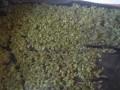В Херсонской области изъята конопля на миллион гривен