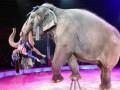 Украинский суд впервые запретил цирку использовать животных в выступлениях