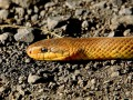 В Житомирской области 9-летнего ребенка ужалила змея