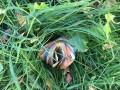 Пограничники нашли в траве 9 тыс евро и сдали руководству: Сеть негодует