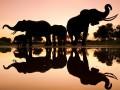 Потрясающие фотографии дикой природы (ФОТО)