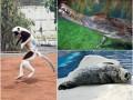 Животные недели: улыбка крокодила и танцы сифаки