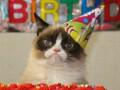 Ненавижу вас: Грустный кот отметил первый день рождения (ФОТО)