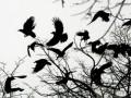 В Бердичеве помощнику кандидата в депутаты подкинули мертвую птицу