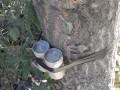 В Одессе обнаружили прикрепленное к дереву взрывное устройство