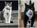 Правительственные коты поскандалили в центре Лондона