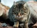 Под Харьковом трое детей пострадали от укусов бешеного кота
