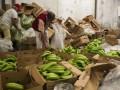 В Роттердаме изъяли крупную партию кокаина в бананах