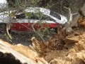 В центре Киева дерево упало на машину
