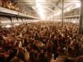 Казахстан заявил о нарушениях норм при проверке мяса птицы из России