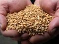 Эксперт ООН прочит Украине шестое место среди мировых экспортеров пшеницы