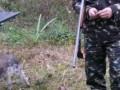 В Ровенской области браконьеры ранили двух егерей