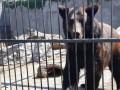 На Донбассе спасли двух медведей, их везут в Закарпатье