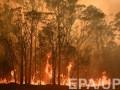 Пожары в Австралии: жителям столицы рекомендуют не выходить из дома