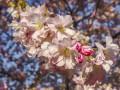 Какой праздник 8 апреля 2020: традиции и приметы