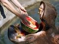 Животные недели: арбуз бегемоту, а панде - торт (ФОТО)
