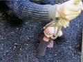 Под Запорожьем из цистерны с семечками спасли женщину