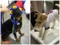 В Киеве прошел парад собак в вышиванках
