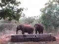 Слоны сами спасли попавшего в резервуар детеныша