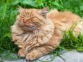 В Сети показали кота-рыбака