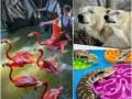 Животные недели: пестрые фламинго, медведи-мечтатели и ящерицы на вечеринке