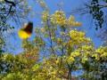 В Украине в субботу сохранится сухая и солнечная погода