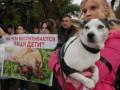 В Киеве начнется второй этап бесплатной кастрации бездомных животных