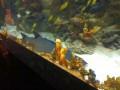 СМИ: В Ocean Plaza акула легла на дно и тяжело дышит