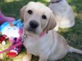 Репортер прервала прямой эфир, чтобы спасти собаку