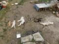 В Харькове напали на приют и зарубили всех животных лопатой