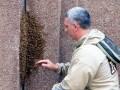 В Нью-Йорке пчелиная королева привела рой к небоскребу