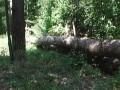 Под Киевом неизвестные вырубают лес