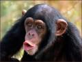 На Шри-Ланке обезьяна убила пенсионерку кокосом