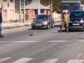 В Харькове дикая утка с утятами заблокировала оживленную улицу