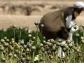 Афганистан нарастил урожай опия в 2011 году на 61%