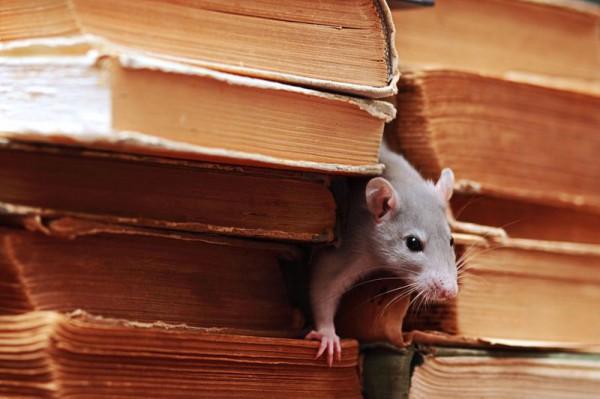 Умнее, чем тебе казалось. Удивительная история о борьбе с крысой