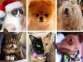 ТОП-10 самых знаменитых животных интернета (ФОТО)
