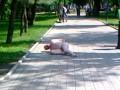 Голый мужчина в Донецке проклинал Януковича (ФОТО, ВИДЕО)