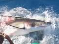 Акула сломала клетку с дайвером у берегов мексиканского острова