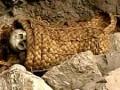 В Перу обнаружили останки принесенных в жертву младенцев