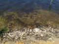 В Донецке случилось ЧП: В реке Кальмиус массовый мор рыбы