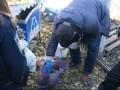 В Житомире нашли пакет с мертвым новорожденным