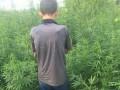 В Киевской области уголовник вырастил 300 кустов конопли на чужом участке