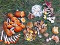 В Одессе отравилась грибами и скончалась 18-летняя девушка