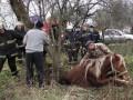 В Житомире лошадь провалилась в канализацию