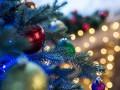 За сколько продают елки в Украине и как сэкономить на ее покупке