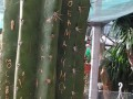 Туристы из РФ испортили столетние кактусы в ботаническом саду Ялты